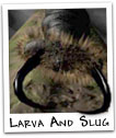 Slug And Larva